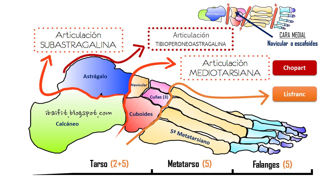 Huella plantar, biomecánica del pie y del tobillo: propuesta de ...