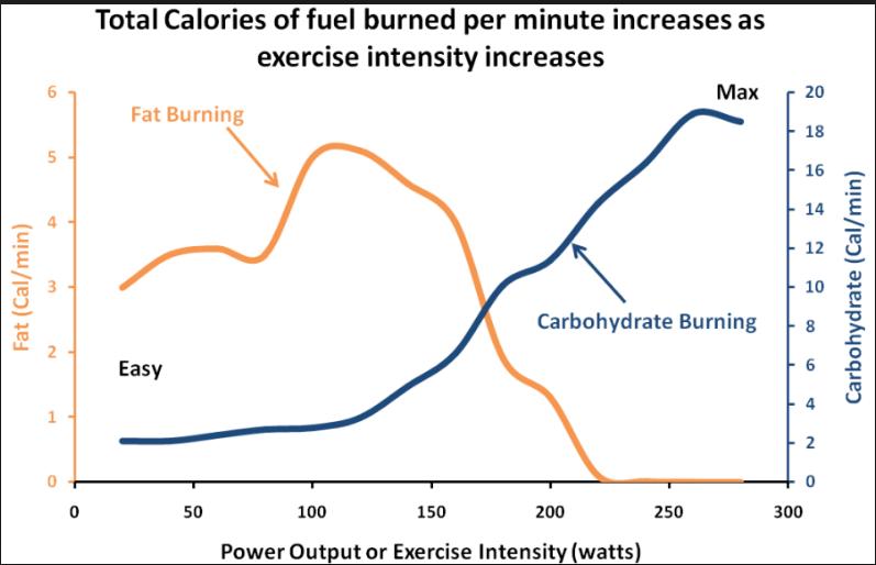 Dieta baja en carbohidratos en el ejercicio - Jorge Roig