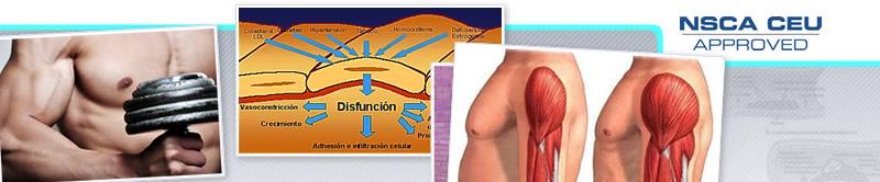 Webinar de Mecanismos de Hipertrofia Muscular Durante el Entrenamiento de Resistencia: ROS, Fuerzas Hemodinánicas y Endotelio