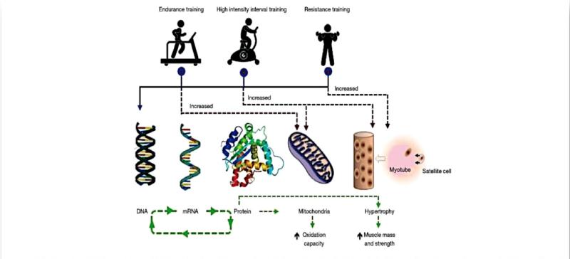 Vías moleculares de señalización mecanosensible