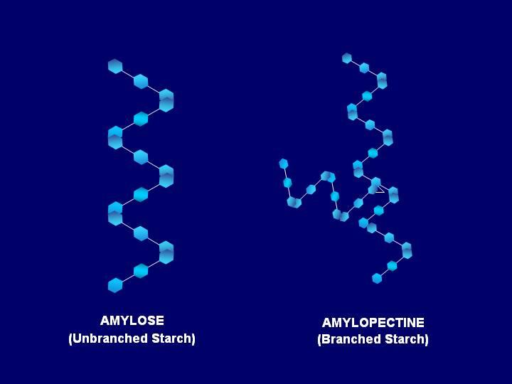 Los usos de la Amilopectina