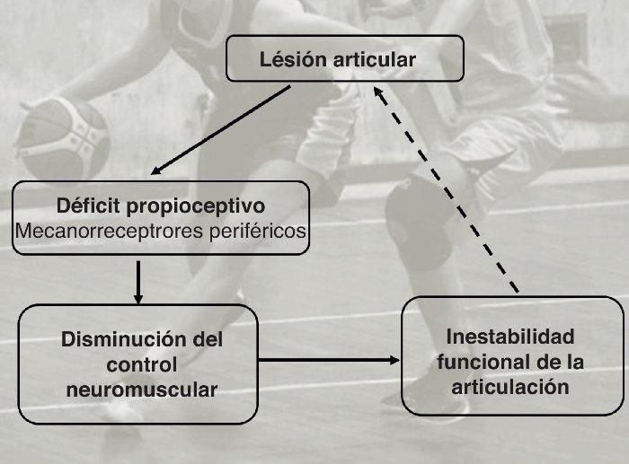 Rol del sistema sensoriomotor en la estabilidad articular durante las actividades deportivas