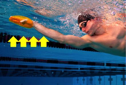 Uso de las palas para el entrenamiento de natación ¿conveniente o perjudicial?
