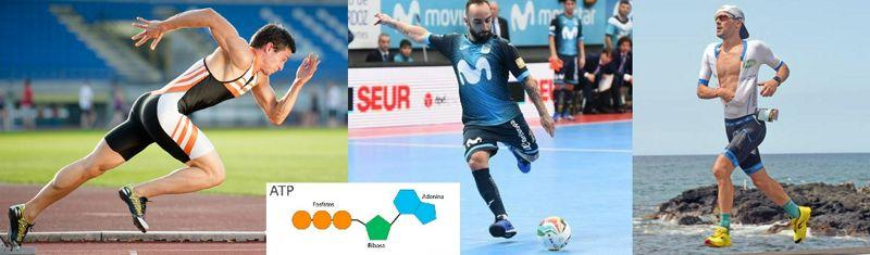 Biomarcadores metabólicos en diferentes tipos de deportistas muy entrenados