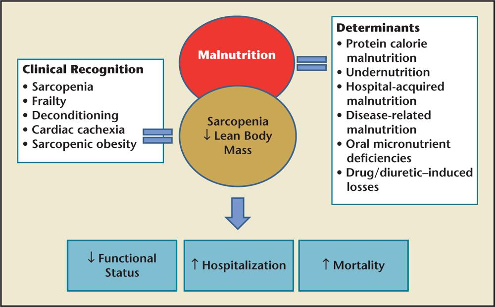 El impacto de la pérdida de proteínas musculares en la salud.