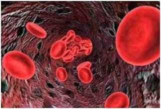 Anemia Ferropénica en los Deportes de Resistencia: Causas e Intervención Dietético-Nutricional
