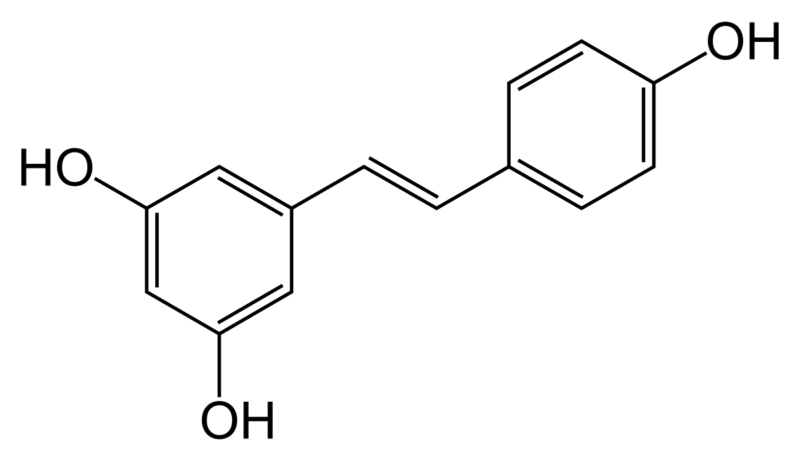 Resveratrol, metformina y síntesis proteica muscular