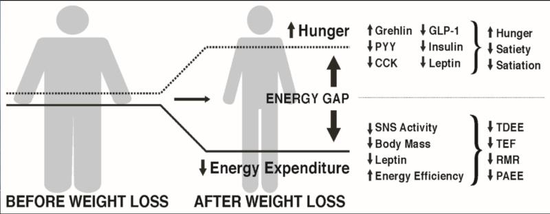La brecha energética en la pérdida de peso graso