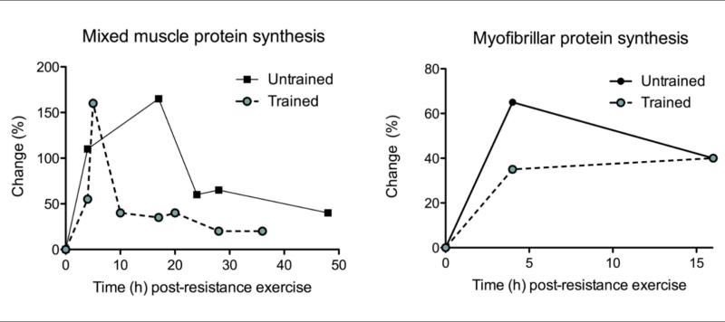 La ingesta de proteínas en la respuesta muscular