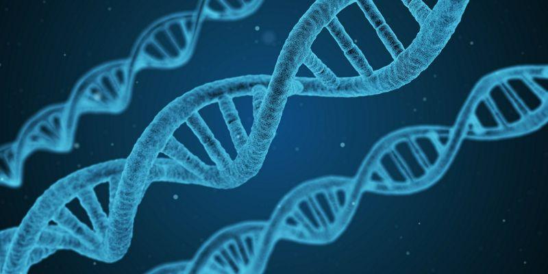 Más Ejercicio, Más Vida… Qué nos Dicen los Telómeros