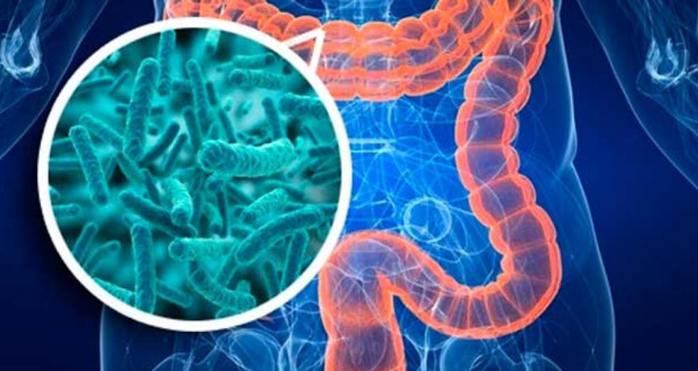 Resultado de imagen para microbiota humana