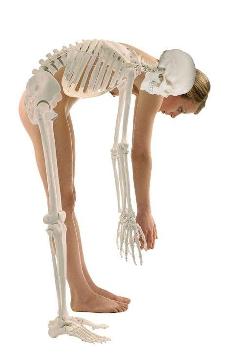 Análisis de ejercicios en SEP (sala de entrenamiento polivalente): prevención de lesiones en programas de fitness.  ¿Flexión raquídea (tronco)?