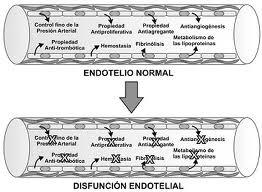 Función endotelial y ejercicio físico