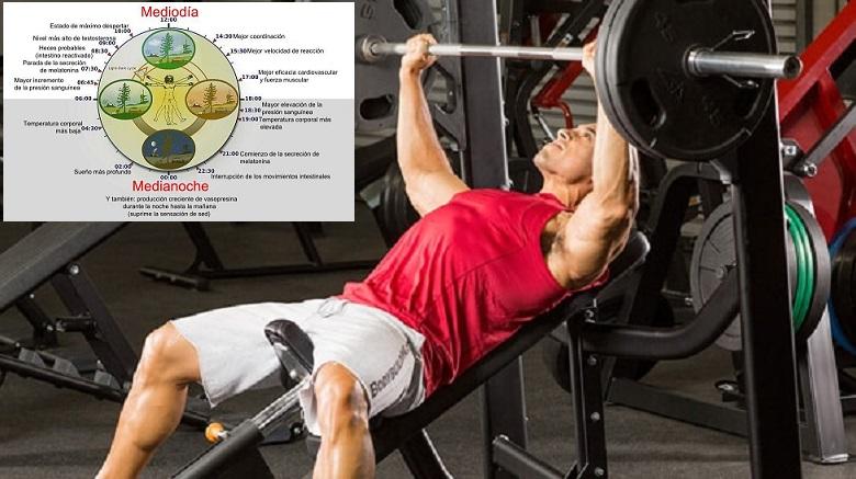 Respuestas agudas y retrasadas de las hormonas esteroideias, lactato sanguíneo y biomarcadores de daño muscular después de una sesión de entrenamiento de la fuerza: efectos del momento del día