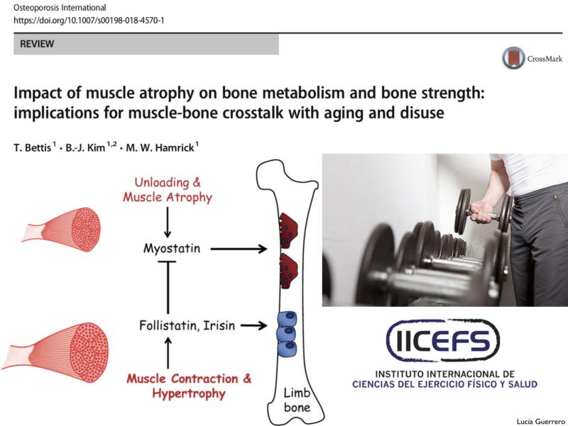 Inmovilización, Desuso, Microgravedad: Contracción Muscular y Salud Ósea