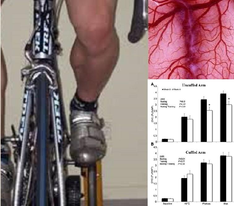 La adaptación microvascular cutánea localizada al entrenamiento físico en los humanos