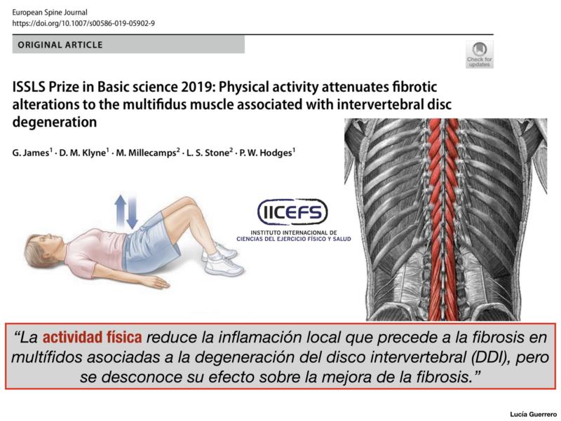 La actividad física atenúa las alteraciones fibróticas en los multífidos asociadas con la degeneración del disco intervertebral