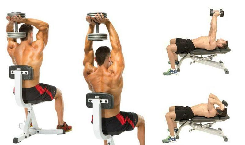 Efecto de la posición del hombro sobre la actividad de las porciones del tríceps braquial en ejercicios de extensión de tríceps con mancuerna