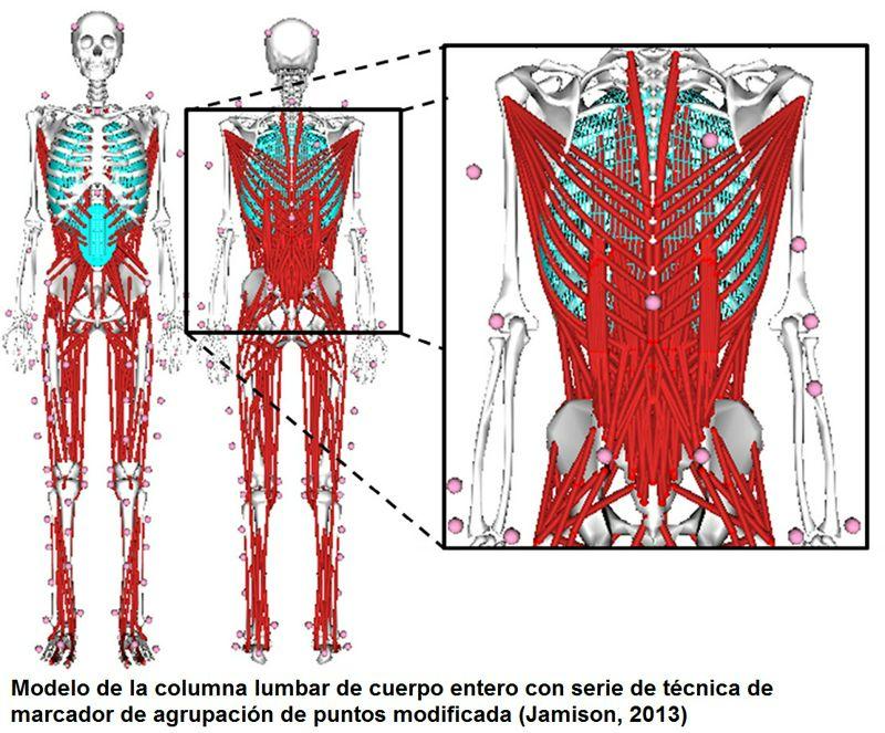 Consecuencias biomecánicas de correr con debilidad de la musculatura profunda del 'core'