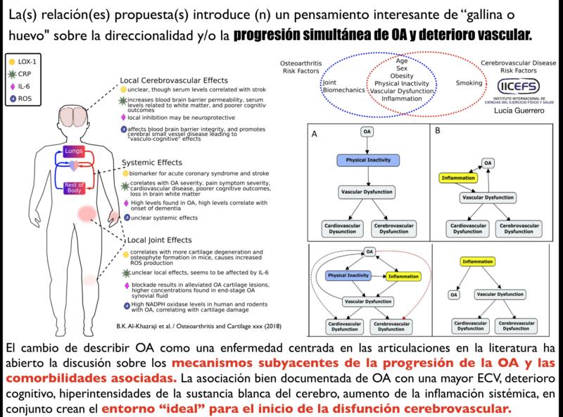 Mecanismos compartidos Osteoartritis y Enfermedad Cardiovascular