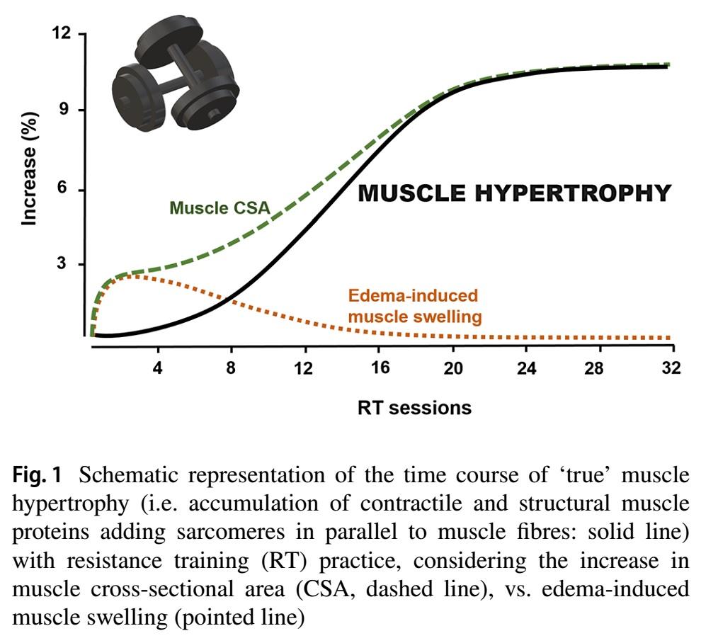 Hipertrofia del músculo esquelético: el rol del daño muscular y la síntesis de proteínas del músculo