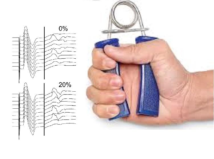 Efecto de la respuesta del sistema circulatorio al control motor en contracciones unilaterales