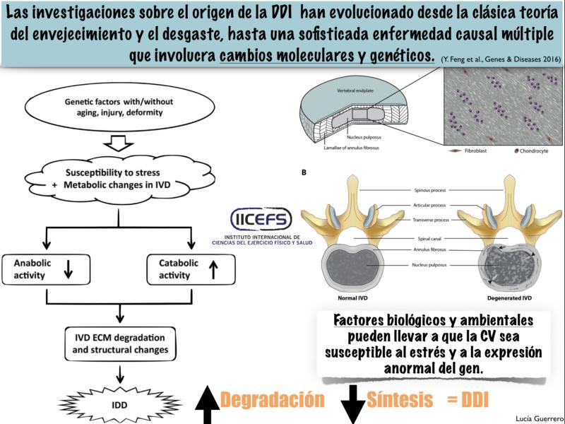 Factores Genéticos implicados en la Degeneración del Disco Intervertebral