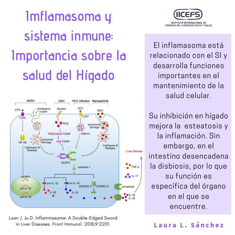 Inflamasoma y sistema inmune: Importancia sobre la salud del hígado.