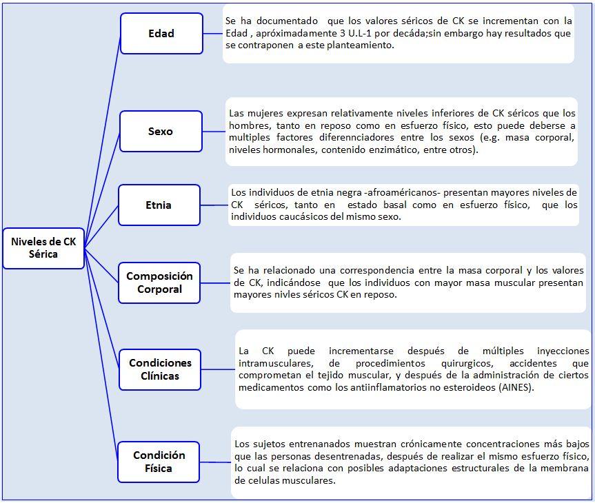 informacion sobre la creatina quinasa