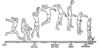 voleibol entrenamiento por fases deportes