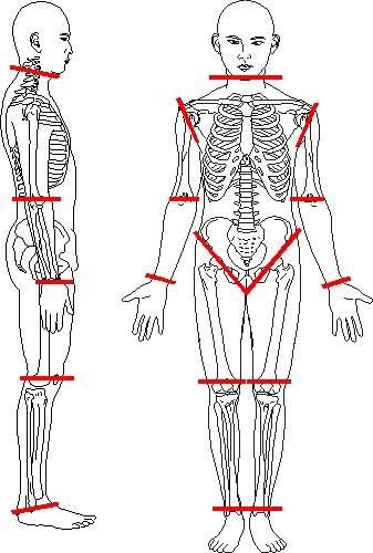 Volumen corporal total instituto de investigaciones for Cuales son medidas antropometricas
