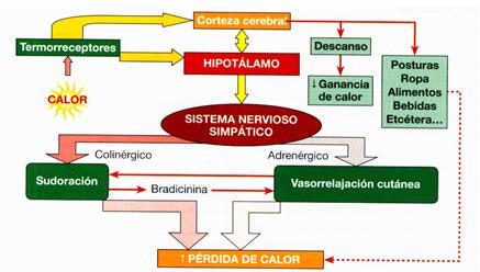 El corsé del departamento lumbar de la columna vertebral