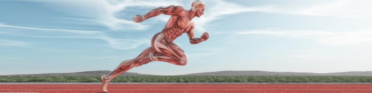 Fundamentos de la Anatomía Funcional y Patrones de Movimiento