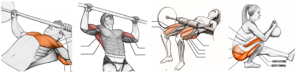 Diplomado en Anatomía Funcional y Patrones de Movimiento