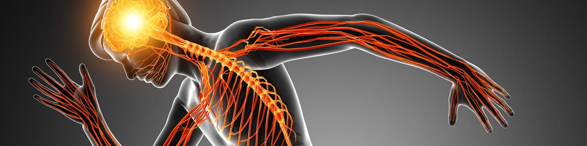 Curso de Neurociencias Aplicada a la Mejora del Rendimiento Deportivo