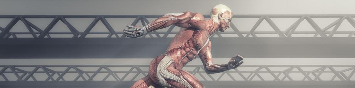 Bases Adaptativas, Anatomo-Fisiológicas y Evaluativas del Ejercicio