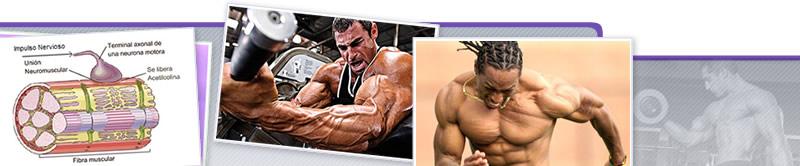 Webinar de Estatus Muscular: ¿Cómo Puede Ser Modificado?