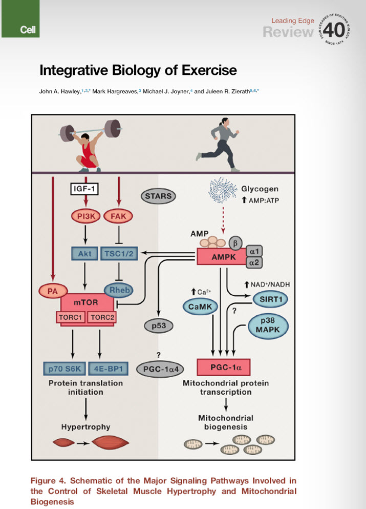 Integrative Biology of Exercise