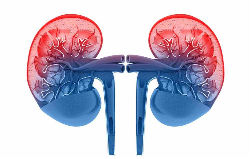Proteínas y función renal en el siglo XXI