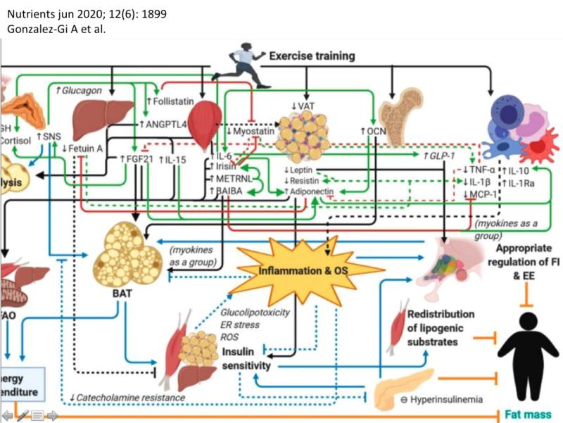 Algunas comunicaciones moleculares del músculo esquelético. Un poco de mioquinas a favor del rendimiento y la salud