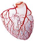 Angiogénesis: Mito o Realidad? Historia de un caso real