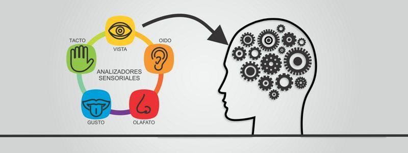 Los Analizadores Sensoriales, Neurociencias y Deporte