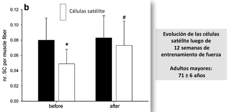 Respuestas de la células satélites a los estímulos de entrenamiento