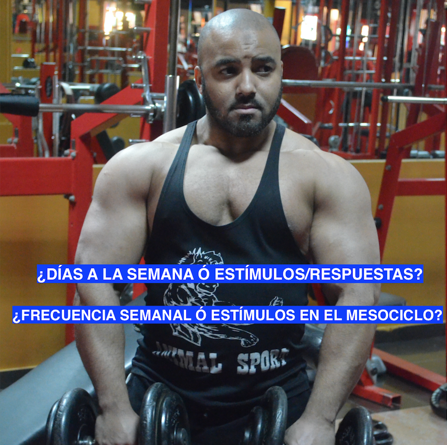 Frecuencia de Entrenamiento e Hipertrofia Muscular