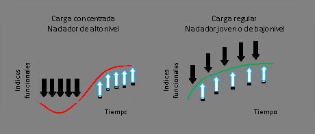La adaptación como condicionante del entrenamiento a largo plazo en natación