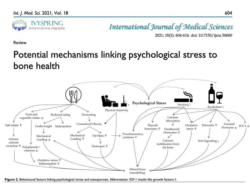 Estrés psicológico y salud ósea