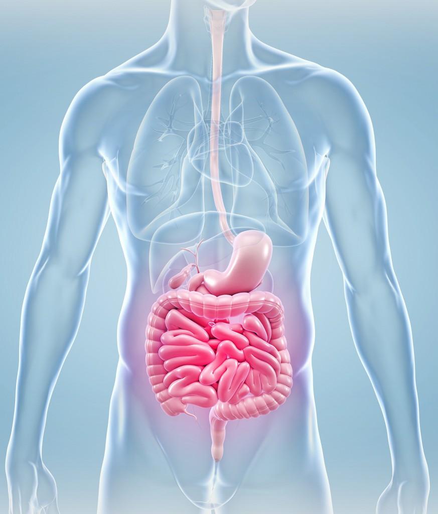 Ejercicio de resistencia y microbiota intestinal