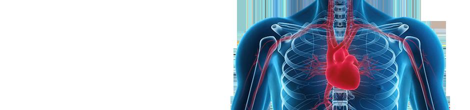 El ejercicio físico previene la senescencia celular en los leucocitos circulantes y en la pared arterial