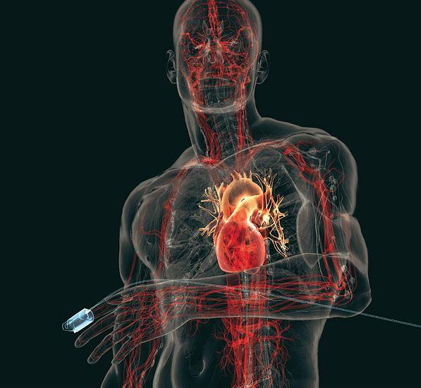 La Variabilidad de la Frecuencia Cardiaca y las Adaptaciones al Entrenamiento