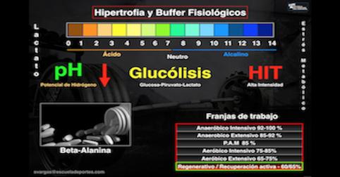 Hipertrofia y Buffer Fisiológicos